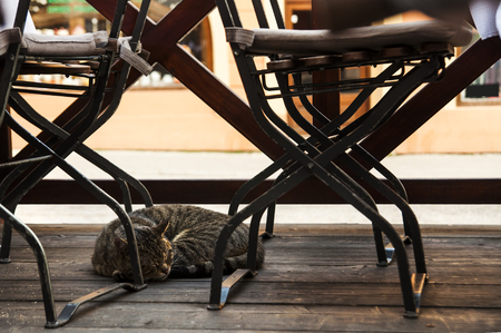 Tabby cat sleeping outside the street garden cafe on a wooden podium among empty tables and chairs. Relax cafe.