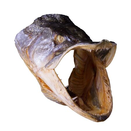 Drided pike head with open mouth and sharp teeth isolated on white background 免版税图像
