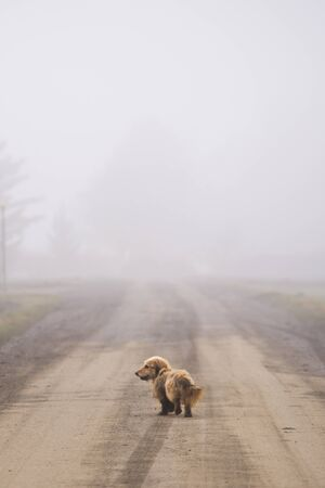 Little wandering dog walking down the road in fog. Travel alone in countryside