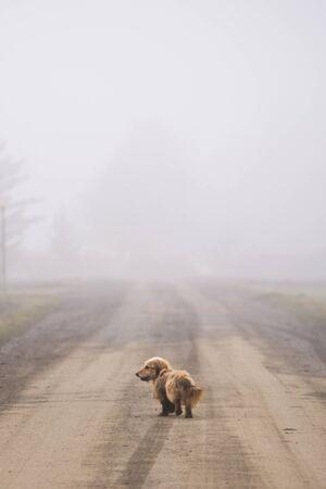 Petit chien errant marchant sur la route dans le brouillard. Voyager seul à la campagne