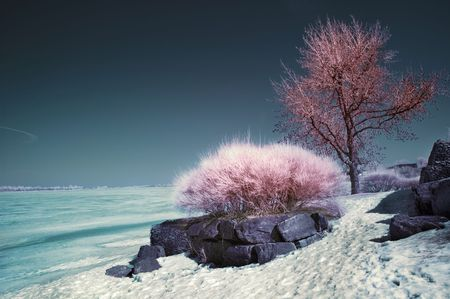 Winter scene shot with an infrared filter