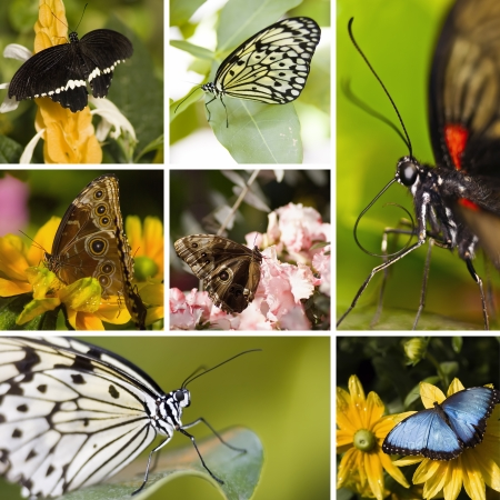 Collage of seven different butterflies in the same picture photo