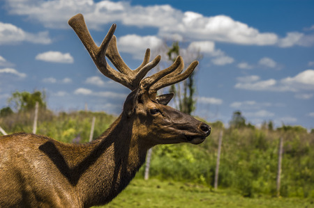 close-up view of a deer in its captive habitat