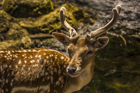 close-up view of a deer in its natural habitat Banco de Imagens - 35547693