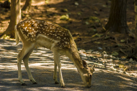 close-up view of a deer in its natural habitat Stock fotó