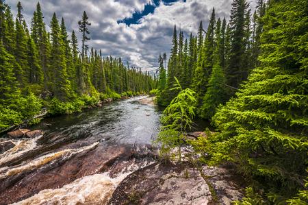 forest river: National park Grands Jardins Charlevoix Quebec Canada