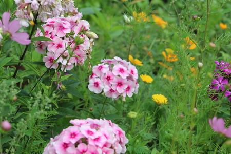 no entrance: garden flowers are suitable for creating a cozy green area in the garden to decorate the front flower bed