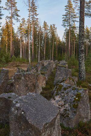 huge stones, many coniferous trees 写真素材