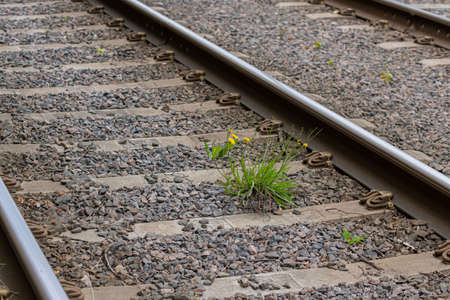 yellow flowers of the railway tracks Banque d'images