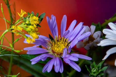 blue chamomile flowers on a multicolored background closeup