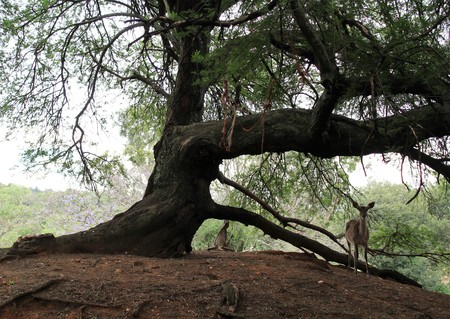 Wild deer and a tree in the forest
