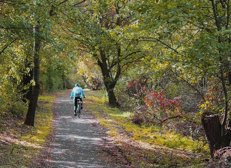 Outdoor sport - a bicycle rider in the autumn forest Stock Photo