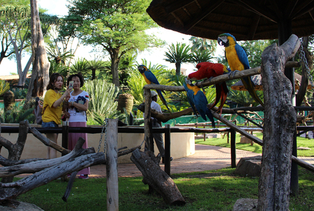 Two women - tourists watching macaws at bird park of Monte Casino, South Africa
