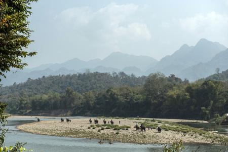 An elephant ride to the jungle