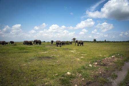 amboseli: Elephant herd in Amboseli Stock Photo
