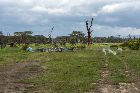 naivasha: Boats, dead trees and acacia on the shores of Lake Naivasha