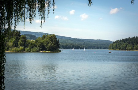 lipno: Many sailing boats on the Lipno dam and the tree