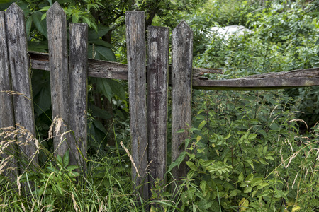 A broken fence overgrown with nettles