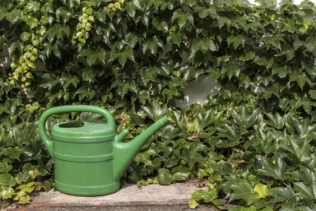 screen savers: Green garden water saver between the ivy