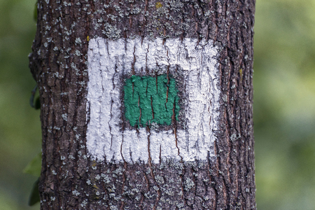 Square white flag of woodsman on the tree in the forest Stock Photo