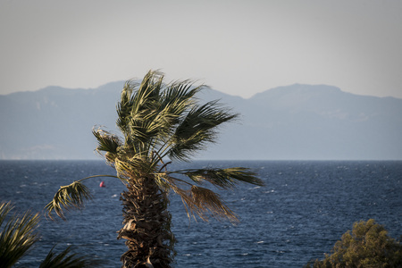 high winds: palm on the beach in a strong wind Stock Photo