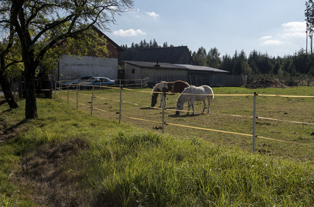 Two horses in a small farm house