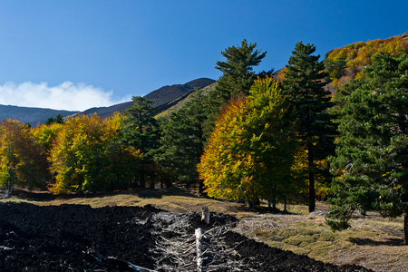 trees with colorful autumn leaves at the foot of Etna volcano with black lava circle Stock Photo