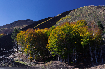 trees with colorful autumn leaves at the foot of Etna volcano with black lava circle on Sicily Stock Photo