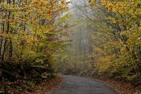 and a narrow forest path in a mist between trees and shrubs with colored leaves in autumn