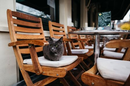 A gray cat sits on a chair on the restaurants summer veranda. 스톡 콘텐츠