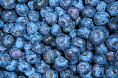 Background Blueberry. completely closed screensaver. Blue berries. Natural Zdjęcie Seryjne