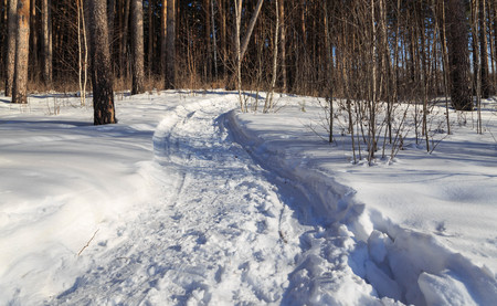 rural scene: path in the forest sunny winter road Rolled Stock Photo