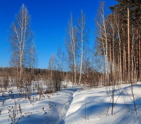 scene season: path in the forest sunny winter sun day