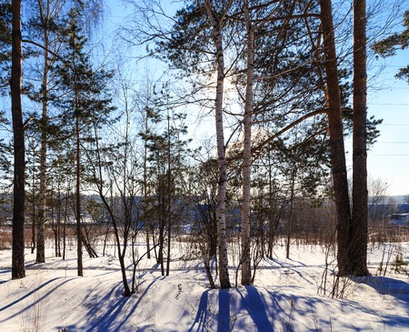 scene season: sun shines through the trees Winter forest