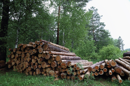 pile of logs: pile of logs in forest summer cloudy Stock Photo