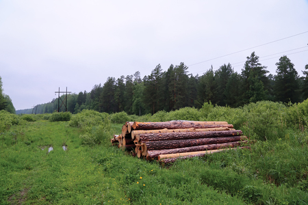 illegal logging: pile of logs in forest summer cloudy Stock Photo