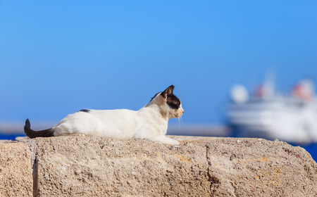 Cat sitting in ancient stone masonry wall fencing at port of Rhodes