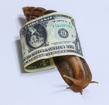 large snail wrapped in dollar bill - the American dollar Stock Photo