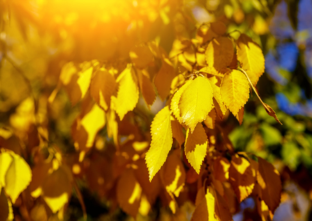Colorful foliage in the autumn park/ Autumn leaves sky background
