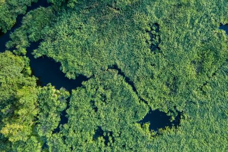 swamp view from drone. Swampy landscape. View of an impassable swamp from a height. Aerial photography.