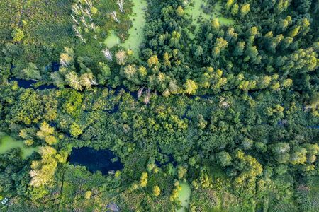 swamp in the forest view from drone. Swampy landscape. View of an impassable swamp from height. Aerial photography Wild forest landscape. Фото со стока