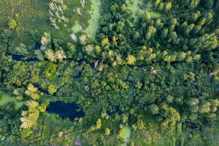 Small stream in morning forest. Drone landscape of european forest from above.