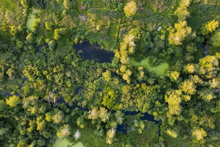 top view tree, beautiful background ,aerial view , mangrove forest, Natural grass texture 스톡 콘텐츠