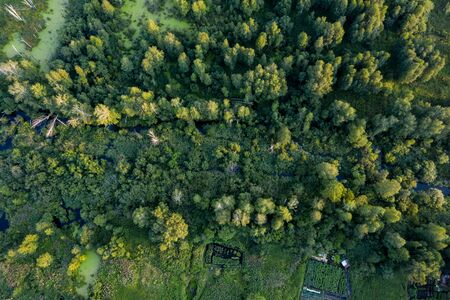 swamp in the forest view from drone. Swampy landscape. View of an impassable swamp from height. Aerial photography Wild forest landscape. Banco de Imagens