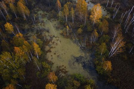 Nature and landscape: aerial view of forest and lakes, autumn leaves, foliage, greenery and trees in wilderness landscape