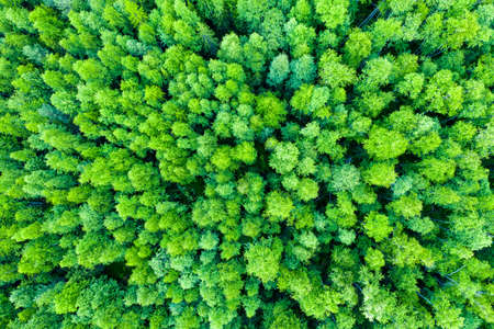 Aerial view of autumn trees. Colorful trees from above. Panorama. 版權商用圖片