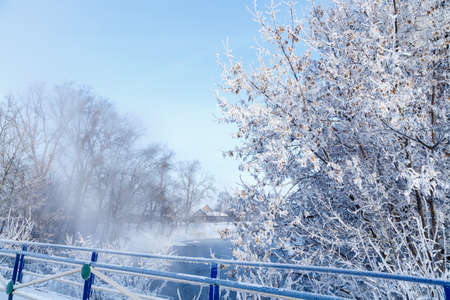 Closeup view of bush covered with hoarfrost on winter morning. 版權商用圖片