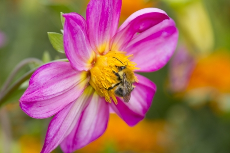 Bee on flower in garden