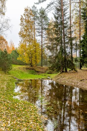 The wild area in beautiful forest in Autumn, Specular reflection in water, Valday national park, yellow leafs at the ground, Russia, golden trees, cloudy weather