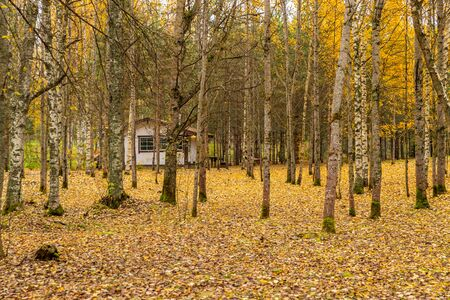 Forest lodge in backwoods, wild area in beautiful forest in Autumn, Valday national park, yellow leafs at the ground, Russia, golden trees, cloudy weather